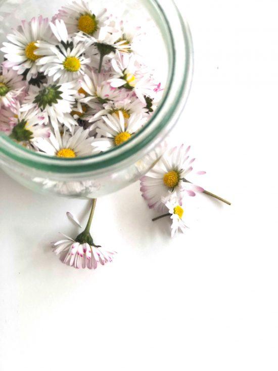 Gänseblümchen-Tinktur