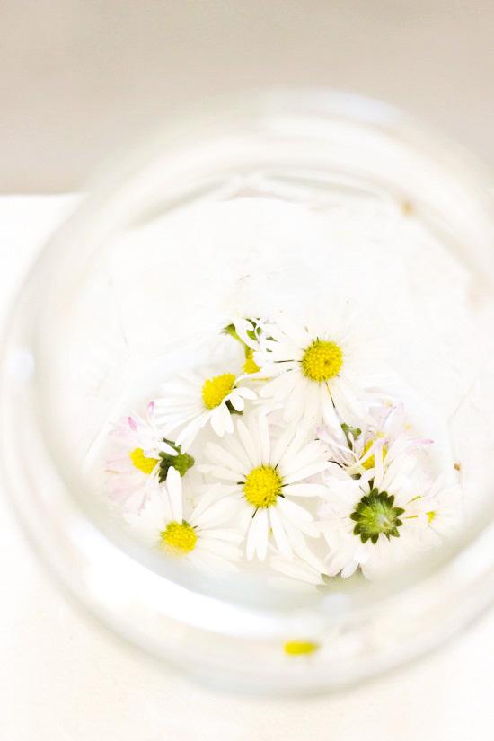 Gänseblümchen Tinktur I Natürliches Gesichtswasser