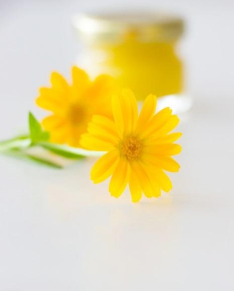 Küchenkränzchen Calendulasalbe I Ringelblumensalbe